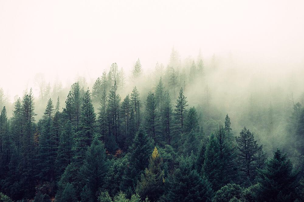 Nature-Photography-Hashtags